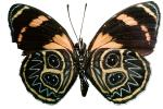 Butterfly, photo-object, object, cut-out, cutout, OECV03P04_19F
