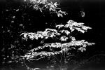 Leaves in a Forest, OFLPCD0656_077