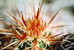 Prickly Spikey essence, Cactus Spines