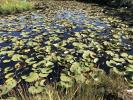 Pond, Water Lily Toad Stools, OFWD01_024