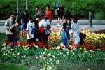 Students in the park, flowers, tulips, PBTV03P14_08