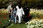 Students in the park, flowers, tulips, PBTV03P14_09