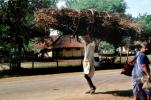 Man carrying twigs, desertification, firewood, India, PDCV01P01_13