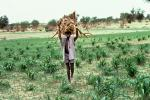 Man carrying Tree Branches, firewood, desertification, Africa, PDCV01P01_15
