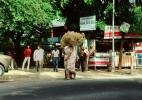 Woman Carries a Heavy Load on her Head, Ahmedabad, Gujarat