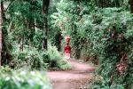 Girl in the jungle, path, rainforest