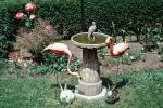 Backyard Birdbath, Rabbits, Flamingo, 1969, 1960s, Muncie Indiana, PDEV01P02_11