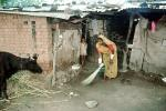 Woman Sweeping, India, PDGV01P02_13
