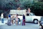 German Shepard Dog, People, Trash, Pickup Truck, PDGV01P06_15