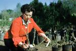 1940s housewife, planting rose bushes, woman, 1950s, PDGV01P08_07