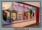 Underwear, Panty, Store, Window-Display, Tacky, Hollywood, PDSV03P10_14