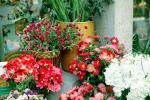 Flower Stand, floral, PDVV01P03_10