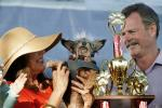1st Place Winner, World's Ugliest Dog Contest, Sonoma-Marin Fair, 21/06/2019