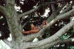 Girl in a Tree, Branches, Swimsuit, 1950s, PFMV01P03_15