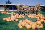 Wagon, Pumpkins, Wagons, 1950s