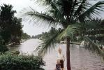 Girl, Female, Feminin, Feminine, woman, lady, Palm Tree, water, 1950s, PORV26P09_11