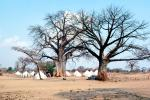 Baobab Trees, Tents, Refugee Camp, curly, twisted, Adansonia, Mozambique, POVV01P11_03