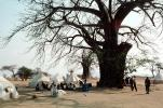 Baobab Trees, Tents, Refugee Camp, Mozambique, curly, twisted, Adansonia, POVV01P11_05