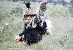 Ostrich, Poachers, Hunter, poaching, poached, Africa, African, 1951, 1950s