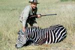 Zebra poaching, Poacher, Rifle, Hunter, poached, Africa, African, 1951, 1950s, PRGV01P10_09B
