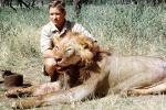 Male Lion, poaching, Poacher, Hunter, poached, Africa, African, 1951, 1950s, PRGV01P10_11B