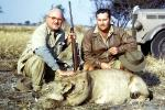Female Lion, poaching, Poacher, Hunter, poached, rifle, African, Africa, 1951, 1950s, PRGV01P10_14B