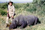 Rhinoceros poaching, Poacher, Hunter, poached, rifle, African, Africa, horns, 1951, 1950s, PRGV01P10_15B