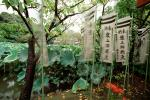 Lily Pads, leaves, prayer flags, Nikko, Shinto Buddhism, RCTV03P15_07