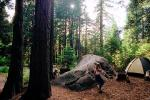 Tent, Boulder, Trees, Forest, Running Girl, RVCV01P05_09.2651