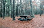 Lone Old Picnic Table, Forest, woodland, leaves, RVPV01P06_14