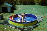 Lawn, Backyard Swimming Pool, Water, Doghouse, 1950s, SWFV02P09_12