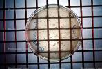 Culture sample, petri dish, Bacteria, Lab, equipment, metal grid, TCLV03P04_13