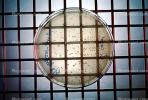 Culture sample, petri dish, Bacteria, Lab, equipment, metal grid, TCLV03P04_14