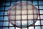 Culture sample, petri dish, Bacteria, Lab, equipment, metal grid, TCLV03P04_17