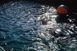 ball floating on water, pool, 1950s, TSPV01P06_15