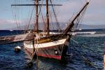 The Carthaginian, square rigger replica whaling ship, Lahaina, Maui, TSTV01P08_03B