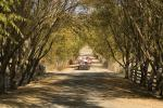 Tree Lined Road, Dirt Road, Tolay Lake Park, Sonoma County, California, USA, unpaved