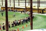 Students waiting in line, children, kids, palm trees, lawn, buses