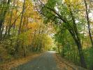 Fall Colors, Autumn, Deciduous Trees, Woodland, Tree Lined Road, VCRD01_118
