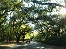 Tree Lined Road, south of Charleston, South Carolina, along Highway-21, VCRD01_245