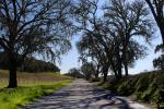 Tree lined road, shadow, Vineyard Road, Paso Robles Wine Country, VCRD03_115