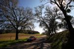 Tree lined road, shadow, Vineyard Road, Paso Robles Wine Country, VCRD03_116