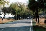 Highway, Roadway, Tree lined road, VCRV04P07_05