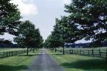 Tree Lined Street, Fence, Grass, Vanishing Point, VCRV07P15_10