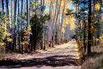 Dirt Road, Tree lined road, unpaved, VCRV08P06_19
