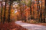 Fall Colors, Autumn, Deciduous Trees, Woodland, Tree Lined Road, Roadway, Highway 402, VCRV09P11_05.0566