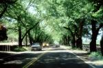 Napa Valley, Tree Lined Road, Road, Roadway, Highway-29, VCRV11P10_14