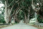 tree lined street, Road, Roadway, Highway, VCRV14P01_12