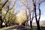 Tree Lined Road, Napa Valley, Highway 12, VCRV16P08_17