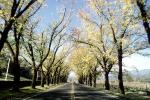 Tree Lined Road, Napa Valley, Highway 12, VCRV16P08_18